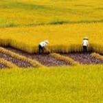 Điều kiện, thủ tục chuyển nhượng đất nông nghiệp