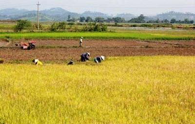 Trách nhiệm của chủ sử dụng đất trồng lúa đã chuyển đổi cơ cấu cây trồng