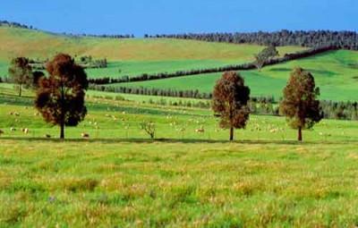Chuyển nhượng phần vốn góp là quyền sử dụng đất