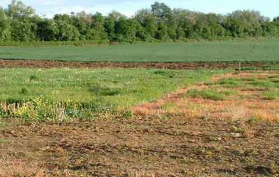 Tìm hiểu về hạn mức nhận chuyển nhượng đất nông nghiệp