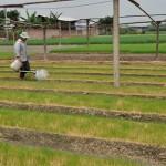 Xác định thu nhập ổn định từ sản xuất nông nghiệp